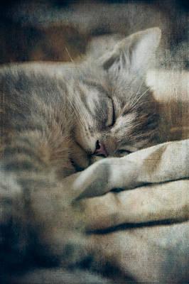 Sleepy Head Photograph - Kitten's Sweet Dream #01 by Loriental Photography