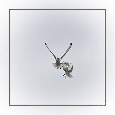 Zoologic Photograph - Kittiwakes Flight by Heiko Koehrer-Wagner