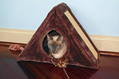 Kitty A-frame Print by Sally Weigand