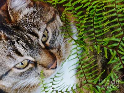 Photograph - Kitty And Waewaekaka Fern by Dianne  Connolly