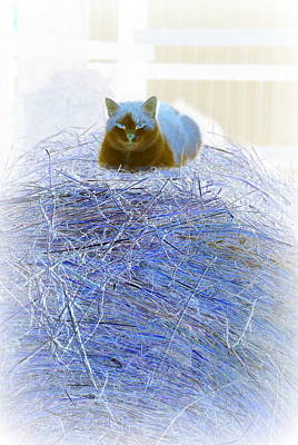 Photograph - Kitty Blue IIi by Kathy Sampson