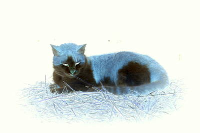 Photograph - Kitty Blue IIII by Kathy Sampson