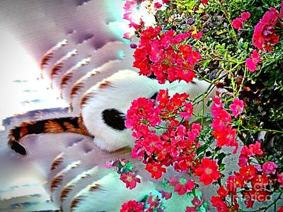 Photograph - Kitty Bouquet by Phyllis Kaltenbach