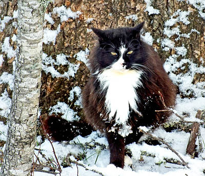 Photograph - Kitty Cat In The Snow Next To Tree by Duane McCullough