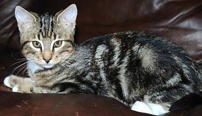 Photograph - Kitty by Cheryl Fecht