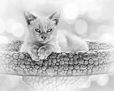 Photograph - Kitty Comfort by Nikolyn McDonald