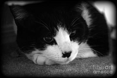 Photograph - Kitty Contemplation by Jennifer E Doll