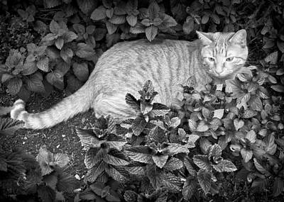 Photograph - Kitty In Garden by Patrick M Lynch