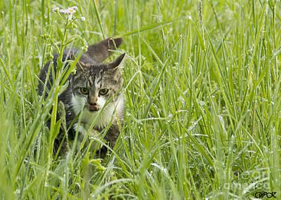 Photograph - Kitty In Grass by Wanda Krack