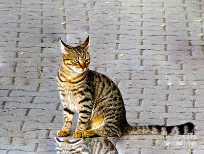 Photograph - Kitty In Sevastopol Russia by Phyllis Kaltenbach