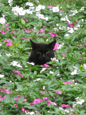 Photograph - Kitty In The Garden by Alison Stein