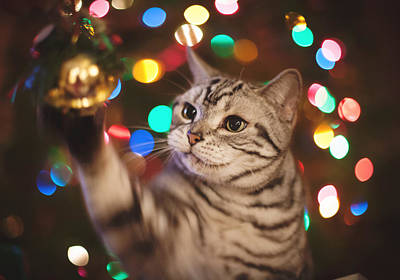Kitty In The Lights Art Print