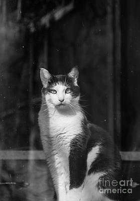 Photograph - Kitty In The Window by Cheryl Baxter