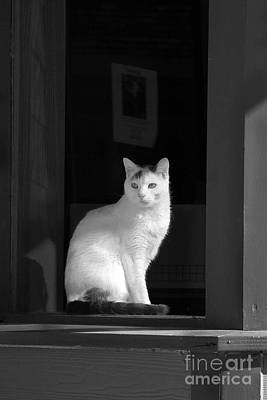 Photograph - Kitty In The Window by Crystal Nederman