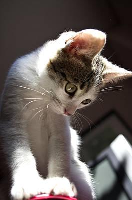 Kittie Photograph - Kitty Kong by David Pujado