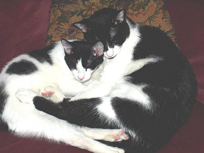 Art Print featuring the photograph Kitty Love by Marna Edwards Flavell