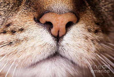 Kitty Nose  Art Print by Sharon Dominick