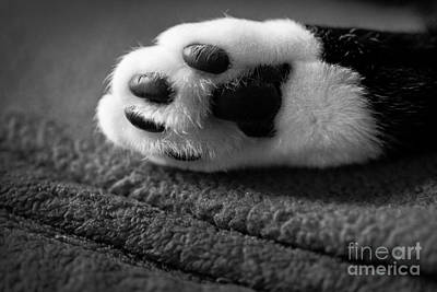 Kitty Paw Close Up Art Print by Sharon Dominick