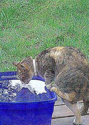 Photograph - Kitty Reflections by Suzy Piatt