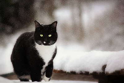 Photograph - Kitty Snow Play by Melanie Lankford Photography