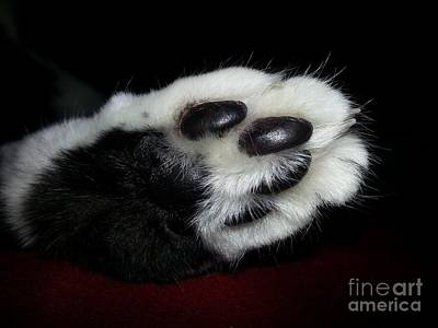 Fuzzy Mixed Media - Kitty Toe Beans by Heather L Wright