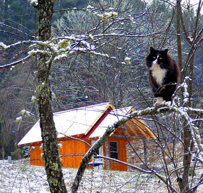 Photograph - Kittycat And Cabin In The Snow by Duane McCullough