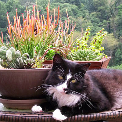 Photograph - Kittycat By The Plants by Duane McCullough