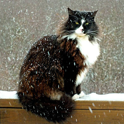 Photograph - Kittycat In The Snow On The Fence by Duane McCullough