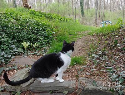 Photograph - Kitty's World by Christina Verdgeline