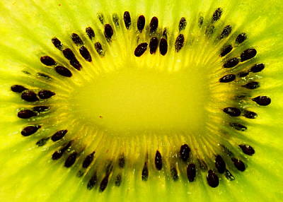 Kiwi Sunflower Art Print