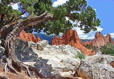 Photograph - Knarled Tree by Jane Girardot