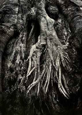 Photograph - Kneeling At The Feet Of The Green Man by Rebecca Sherman