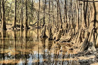 Cypress Swamp Photograph - Kneeling On The Edge by Adam Jewell