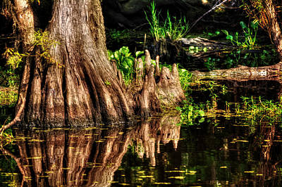 Cypress Knees Photograph - Knees Deep In A Louisiana Bayou by Chrystal Mimbs