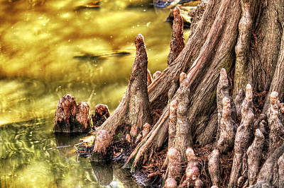 Photograph - Knees Of The Cypress by Jason Politte