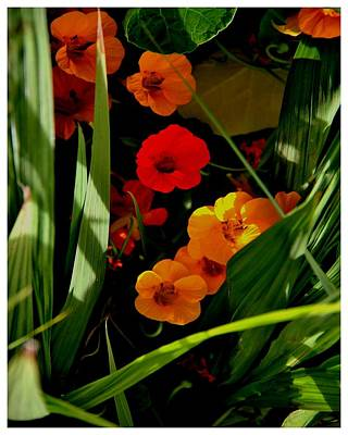 Photograph - Knock Ireland Shrine Flowers by Frank Wickham