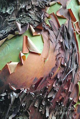 Photograph - Knot Arbutus Tree by Sharron Cuthbertson