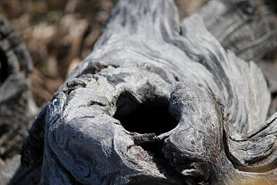 Photograph - Knot Hole by Trent Mallett