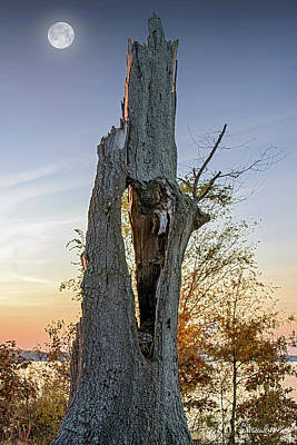 Dead Tree Trunk Digital Art - Knothole - Not Whole - Color by Brian Wallace
