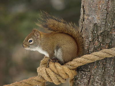 Peterson Nature Photograph - Knotty Squirrel by James Peterson