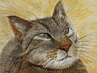 Pastel - Knowing Look Of Wisdom by Lance Sheridan-Peel