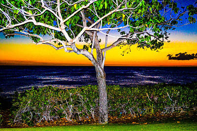 Photograph - Ko Olina Tree In Sunset by Lisa Cortez