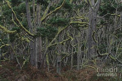 Koa Forest Art Print by Art Wolfe