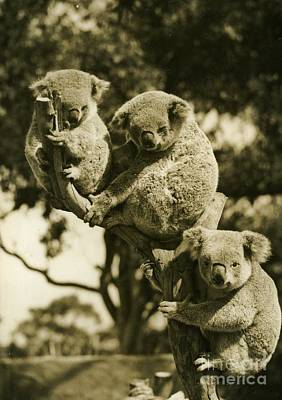 Paris Skyline Royalty-Free and Rights-Managed Images - Koala Austalia  by Nicholas Cornhill
