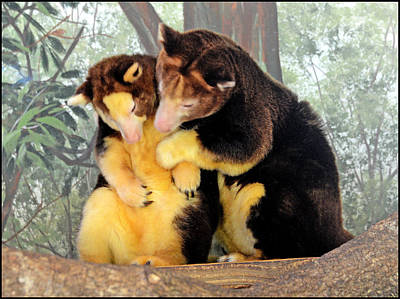 Koala Bear Lovers Original by Allan Einhorn