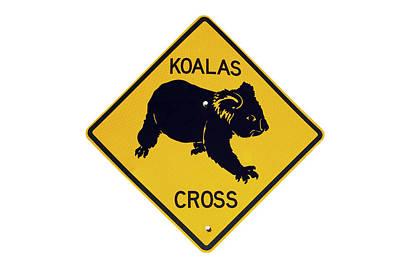 Koala Wall Art - Photograph - Koala Crossing Warning Sign, Australia by David Wall