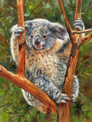 Koala Wall Art - Painting - Koala by David Stribbling