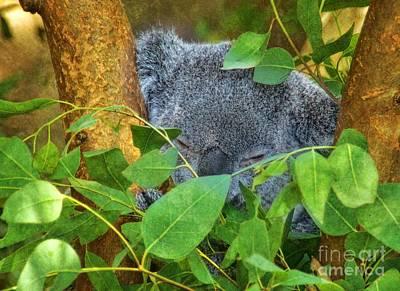 Photograph - Koala Dreams by Peggy Hughes