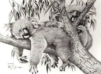 Koala Drawing - Koala Family by Bob Patterson