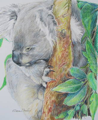 Koala Nap Time Art Print